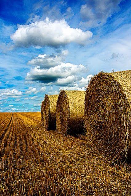 Hay Bales  http://farmtimeclassroom.com/