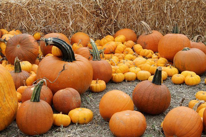 The Pumpkin Patch San Antonio