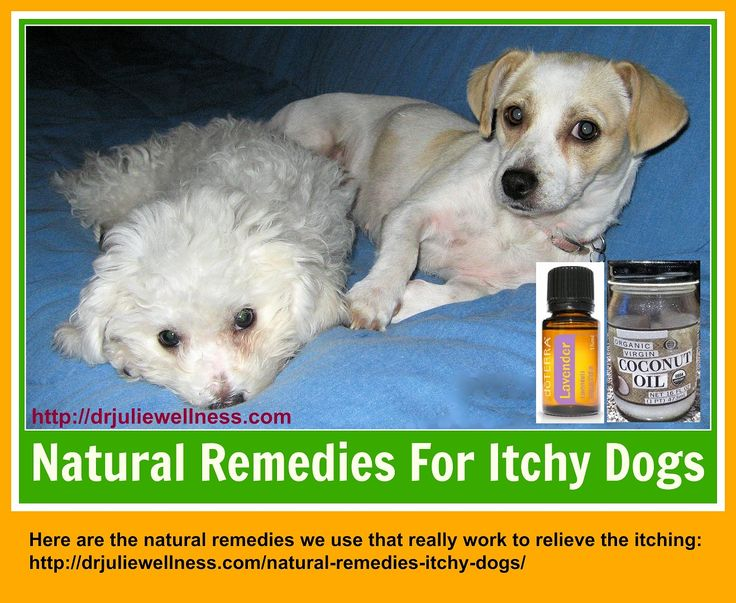 Natural Remedy To Stop My Dog From Itching