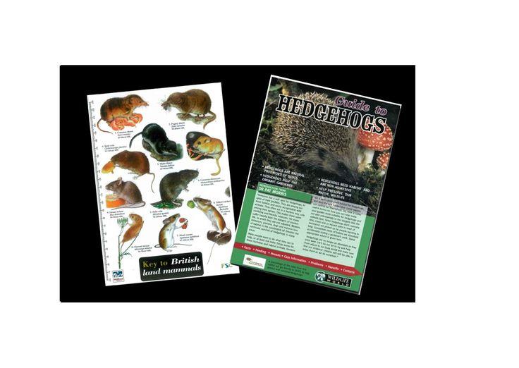 British Land Mammals Field Guide