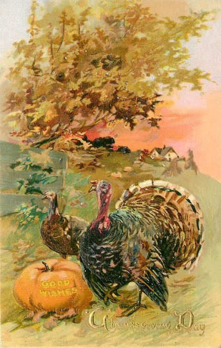 hen & tom turkeys in field  next to pumpkin with GOOD WISHES carved on it