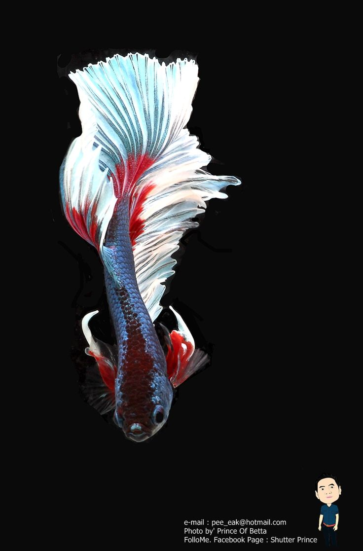 153 best fish tank images on pinterest beta fish beautiful fish