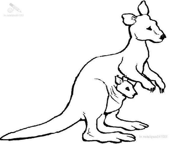 30 Coloring Pages Of Kangaroos Coloring Pages Sketches Kangaroo