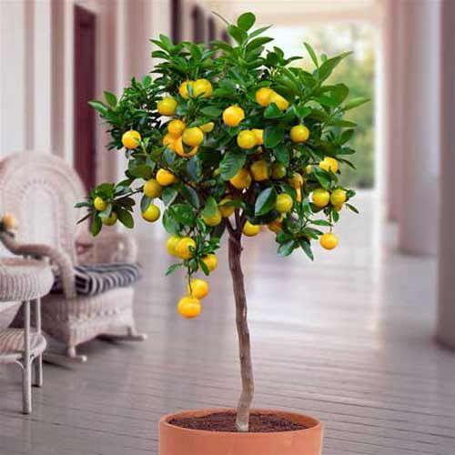 Les 25 meilleures id es concernant arbuste fruitier sur for Entretien jardin saintes