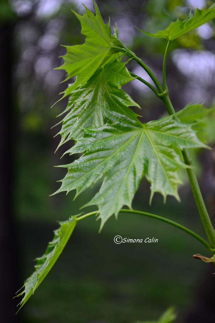 Fresh Green..<3