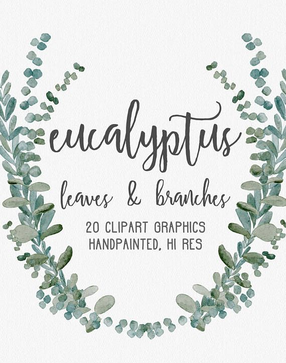 Watercolor Eucalyptus Graphics Commercial Use Muted Watercolor