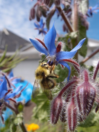 17 best images about honey bees on pinterest bee hives