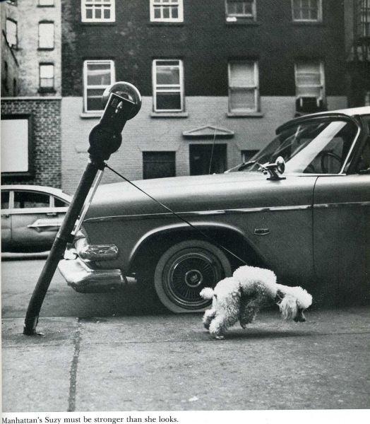 humour-drole-photo-life-magazine-01[1]