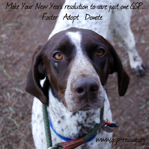 Happy New Year From All Of Us At The California GSP Rescue!