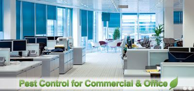 Mourier offers pest control for small office and pest control for corporate office, respectively.