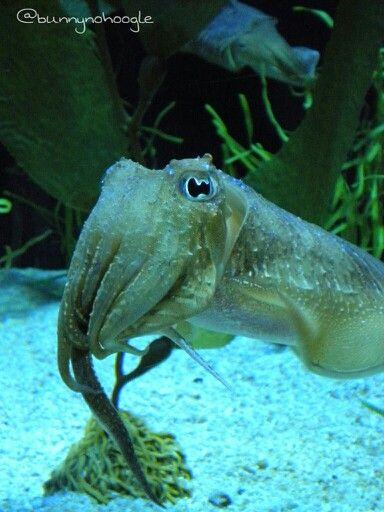 17 Best Images About Ripleys Aquarium On Pinterest Sea