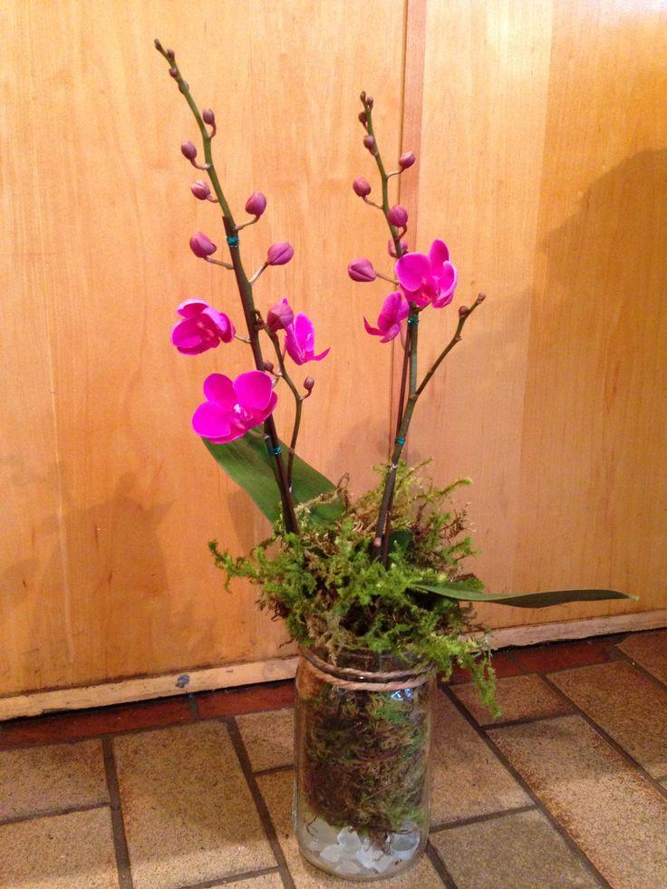 Double stemmed mason jar potted orchids v and j plant shop rebecca wass granville island - Stemmed mason jars ...