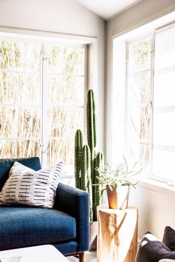 Trend+Alert:+Cool+Indoor+Cacti+via+@mydomaine