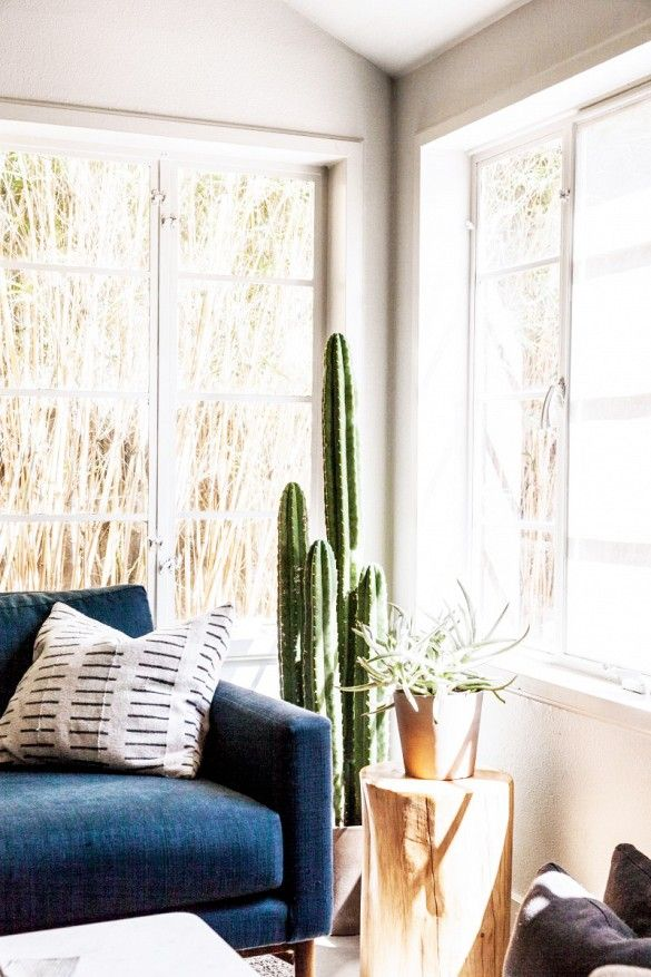 Austin, Texas Living Room With Cactus