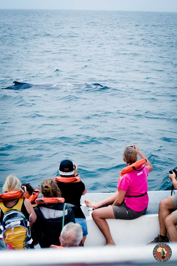 Whale watching on Surf Tour!