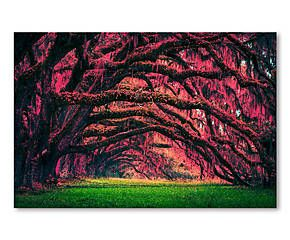 Leinwanddruck Daydreams, 61 x 41 cm