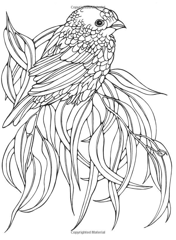 Coloring Pages For Adults Birds : Best images about realistic animals birds
