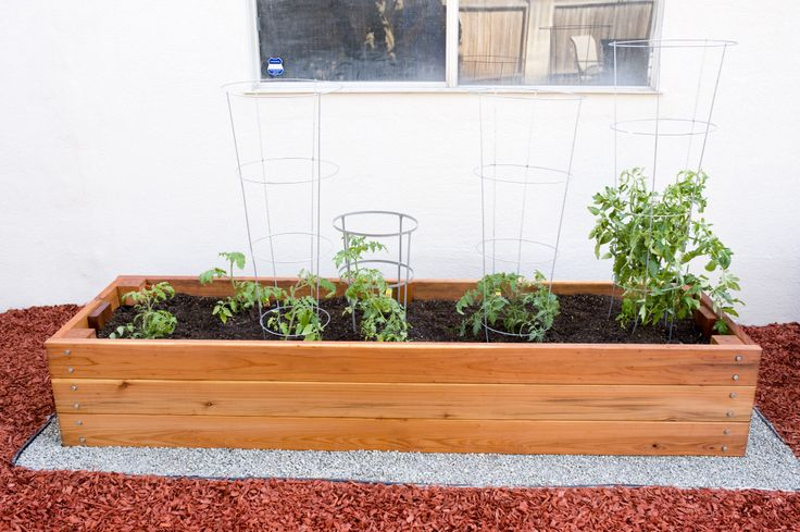 My 8ft X 2ft California Redwood Planter Box For Tomatoes
