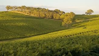 Mclaren Vale can be visited while holidaying in Victor Harbor. http://www.ozehols.com.au/blog/south-australia/victor-harbor-holidays/ #WineTasting #Wineries #Holidays @OzeHols - Holiday Accommodation