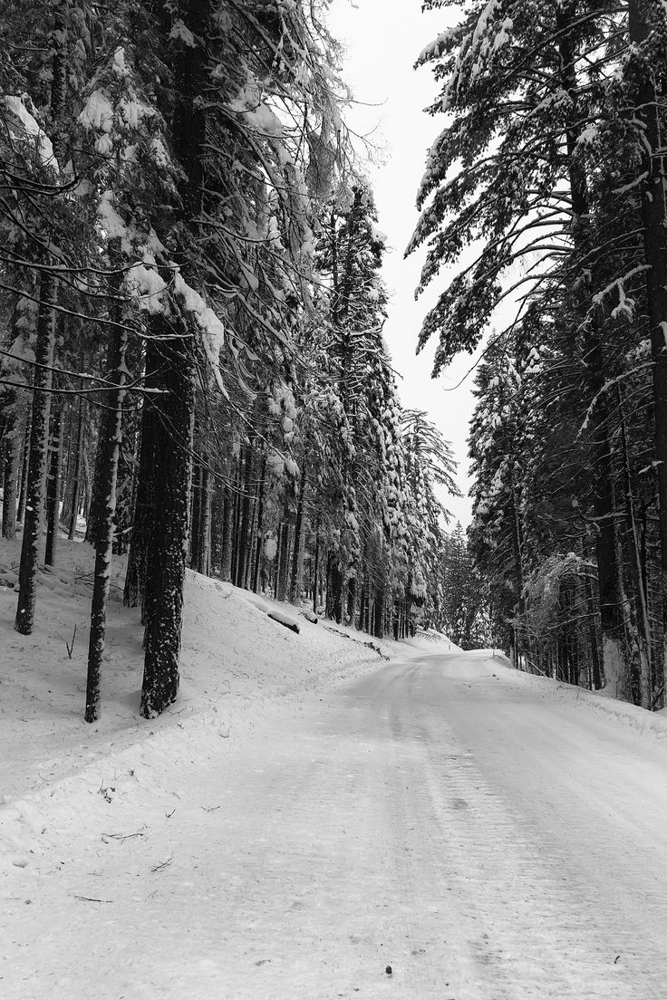 https://flic.kr/p/D4fFeJ | Where is my Sled? | This was what the road looked like driving into Yosemite Valley during this trip.  We had to put on chains and you can see why.  The drive was so surreal as we drove through this canopy of snow covered trees.  I had to stop and capture the moment.