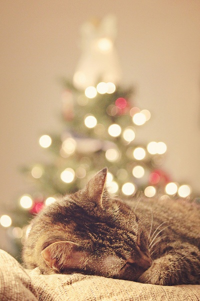 Kitty cat snoozingin front of the tree!
