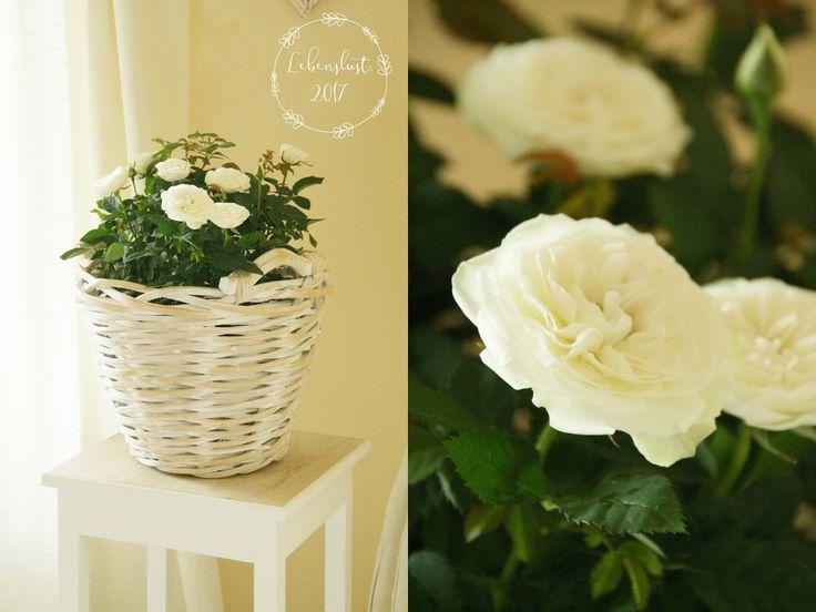 Die besten 25+ Rosenkorb Ideen auf Pinterest Drahtkorb - rose aus stein deko
