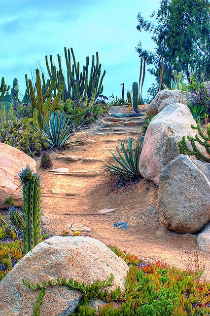 1349 best images about palm springs style gardening in the desert on pinterest