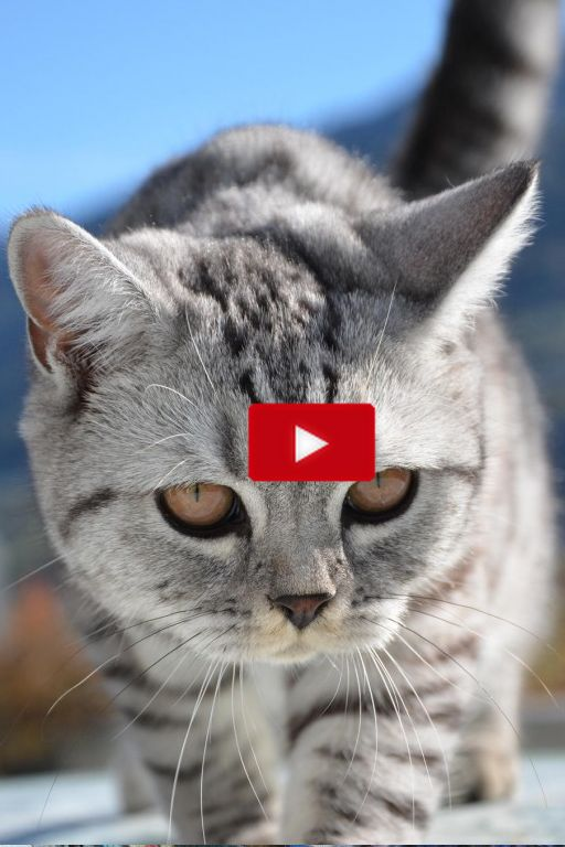 More cute kittens HERE http://www.youtube.com/user/TheFederic777?sub_confirmation=1  #CatVideos #CuteKittens #FunnyCat #KittenVideos