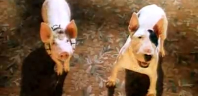 bull terrier movie from movie quot babe pig in the city quot bull terriers 7354