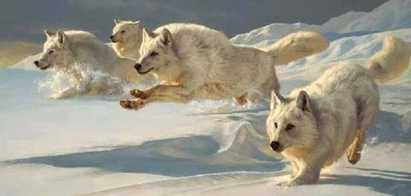 Non puoi fermare la donna lupo, lei corre fiera e selvaggia pic.twitter.com/KV5LAckdJ7