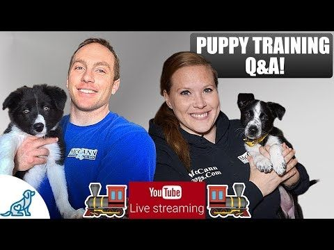 Pin By Mccann Professional Dog Trainers On Videos About Puppies