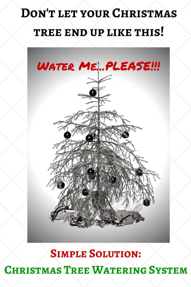 http://www.inspiredforchristmas.com Keep your Christmas tree green and healthy for the whole holidays by using a simple and inexpensive Christmas tree watering system. No more crawling under trees and spilling water.  Also great if you are going away for a few days over the holidays. CLICK THE LINK BELOW to find the best solution for your home: http://www.inspiredforchristmas.com/indoor-decorations/christmas-tree-watering-system/christmas-tree-watering-system/