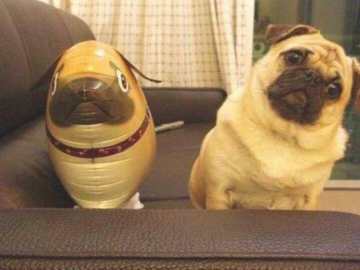 Pugs Are People Too!