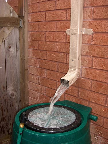 Do's & Don't When Making A Rain Barrel For Rainwater Collection by @FunHouseHome The Fun Times Guide to Household Tips