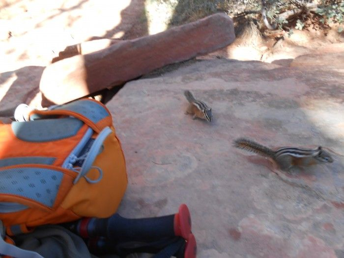 Day Hiking in Zion National Park, Utah