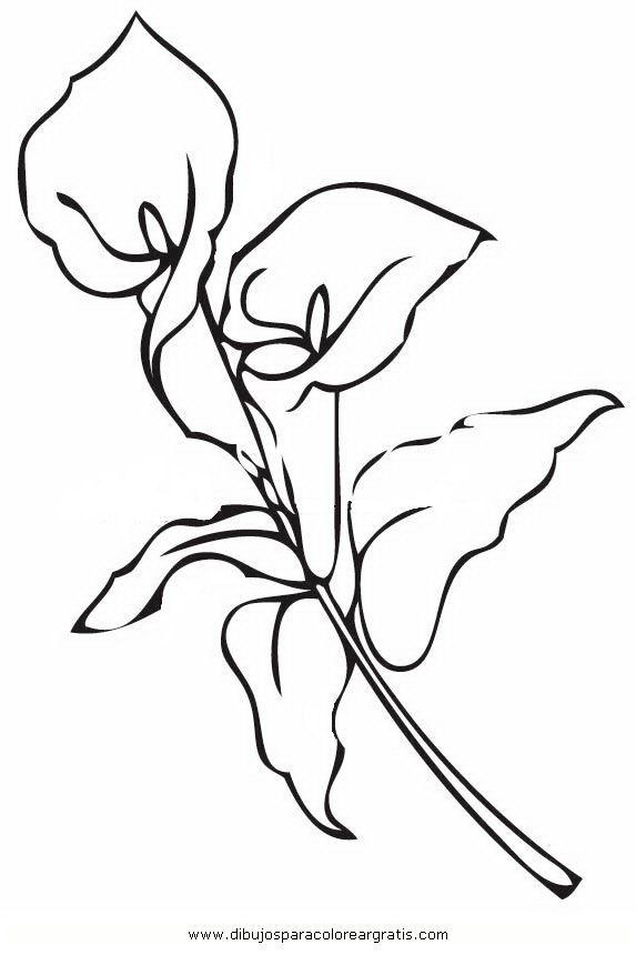 dibujar y pintar alcatraces - Buscar con Google