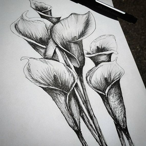 Calla Lilly Flower  Pen Drawing by TurinoCreations on Etsy