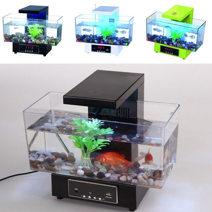 Best 25 cheap fish tanks ideas on pinterest tank stand for Cheap fish tank