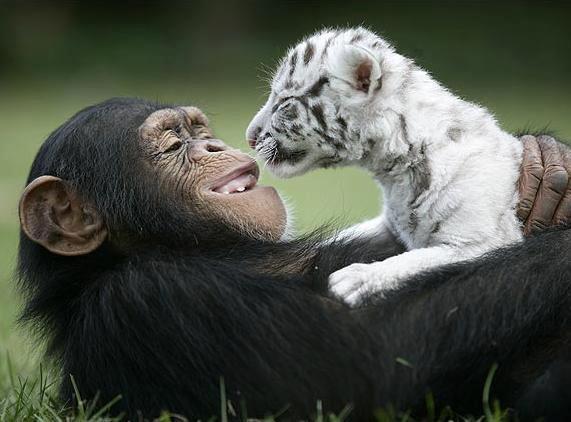 Sie leiden, fühlen und genießen wie wir. Wer gibt uns das Recht über ihre Leben zu entscheiden?    Wir wünschen uns eine Welt, in der wir mit allen Lebewesen friedlich zusammen leben können.    Eine Welt, in der wir sie nicht mehr für ihr Fleisch, ihre Haut, ihre Milch oder Eier oder für unsere Unterhaltung ausbeuten und umbringen.    Lasst uns in Freundschaft und Achtung mit den anderen Lebewesen auf diesem Planten zusammenleben.    www.animalequality.de/speziesismus