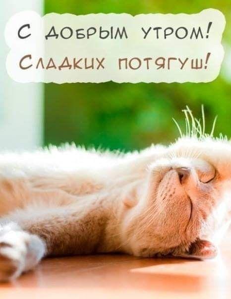 Картинки доброе утро мой сладкий и хорошего дня
