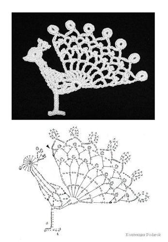 Peacock, Free pattern