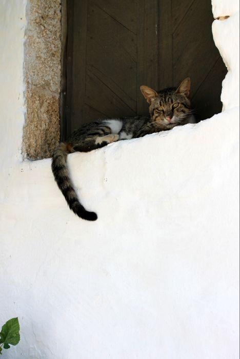 Cat in Rhodes - www.robertozedda.it