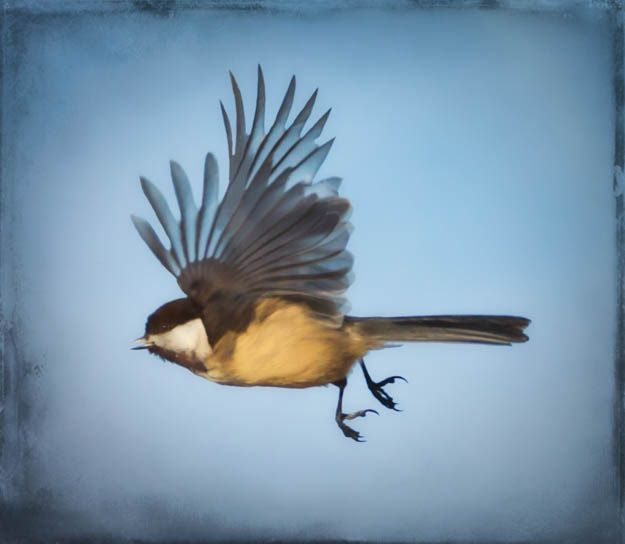 A collection of artistic birds in flight photographs