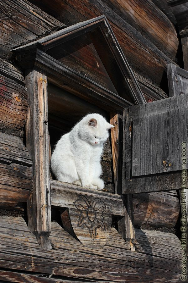 "* * WHITE CAT: ""God, thank yoo fer dis roof and the blessin' of shelter it provides."""