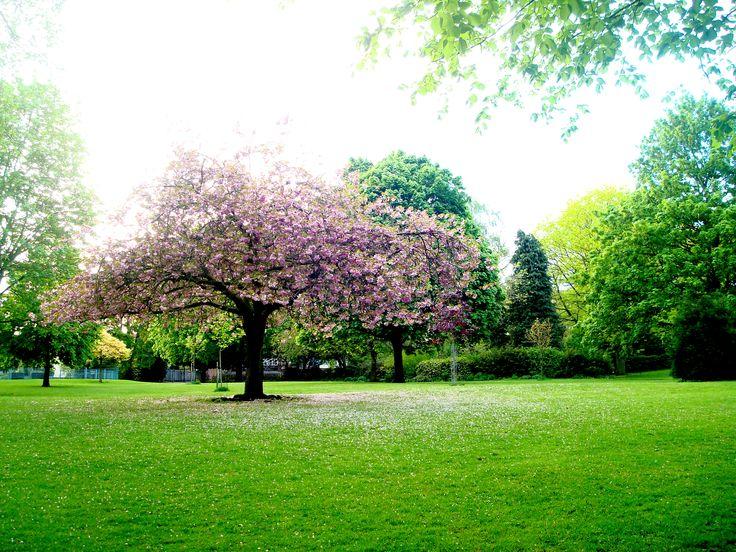 Landscape Design Nottingham