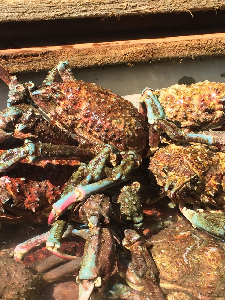 For over 20 years, my family and I have been coming to this local seafood spot in Oxnard, CA to get our ...