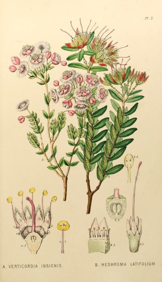 John Lindley, 1839  -  Appendix to the first twenty-three volumes of Edwards's botanical register : - Biodiversity Heritage Library
