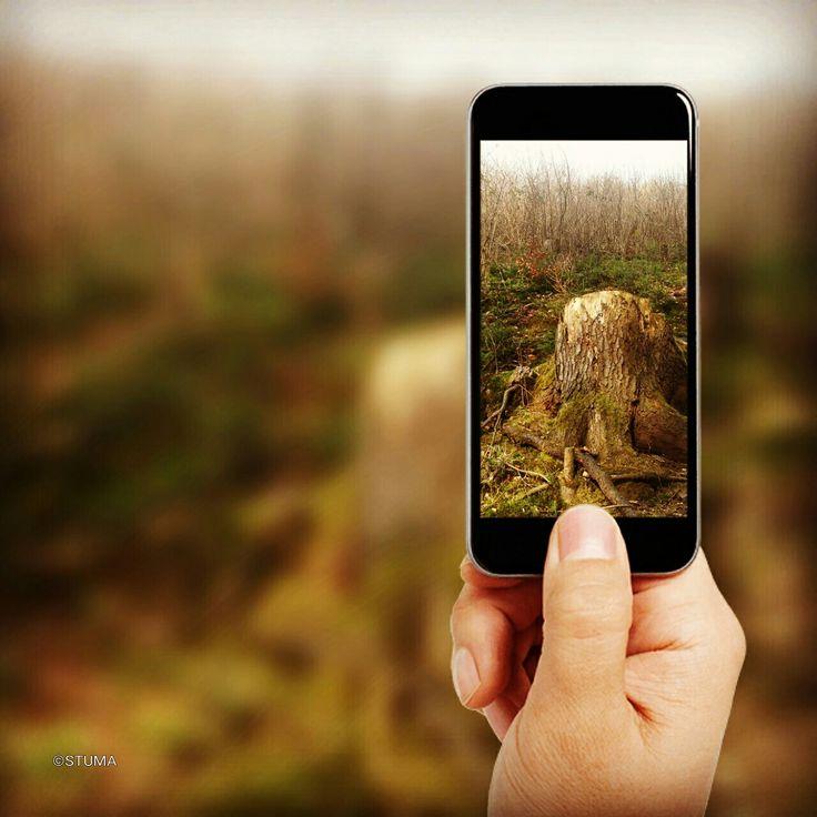 Fotografování pařezu / Photoshoot stump