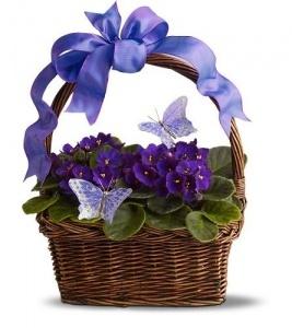 canastas con violetas