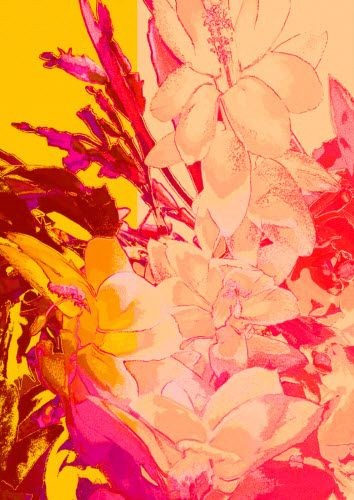 DP46 Christmas Cactus flower 1 Digitally manipulated photograph by Rheta-Mari Kotze
